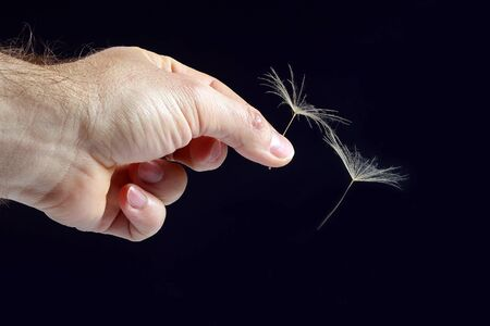 hand with two flying seeds of dandelion on dark background. getting in touch with nature Imagens
