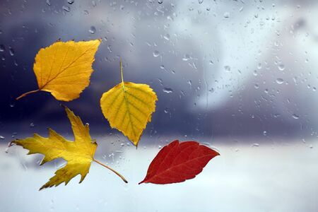 autumn leaves on a wet window on a background of rainy weather 版權商用圖片