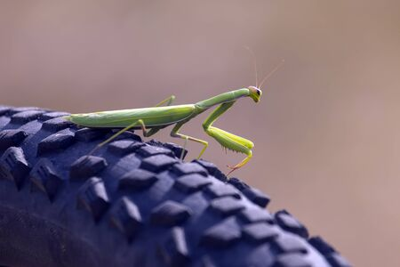 green mantis on a bicycle wheel close-up