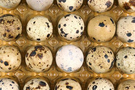 quail eggs in a box close-up