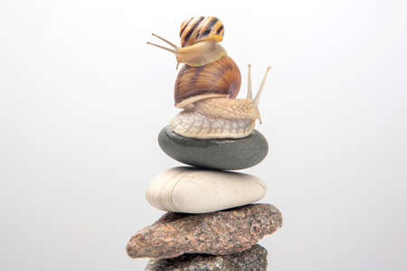 Helix pomatia. Snail on top of a stone pyramid. mollusc and invertebrate. delicacy meat and gourmet food Imagens