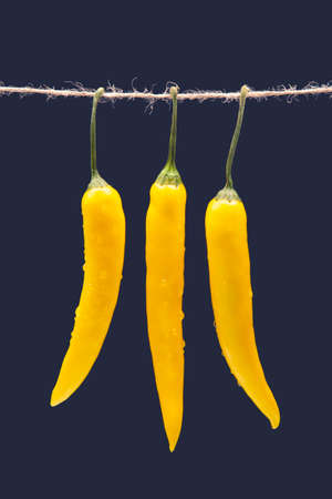 yellow hot chili on a dark blue background. Pepper. Vegetable vitamin food.