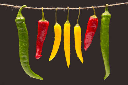 Colored hot chili on a dark background. Pepper. Vegetable vitamin food.