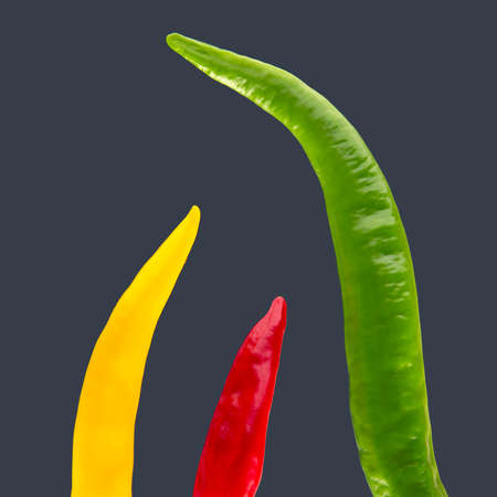 Colored hot chili on a dark background. Pepper. Vegetable vitamin food