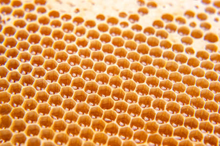 fresh honey in a comb on the light close-up. vitamin natural food. texture and background