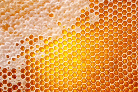 fresh honey in a comb on the light close-up. vitamin natural food. texture and background Imagens