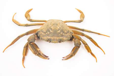 sea crab on a white background Banco de Imagens