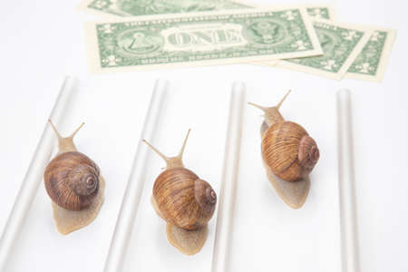 snails run to the finish line with money. breakthrough and perseverance in the business. business relationship competition metaphor.