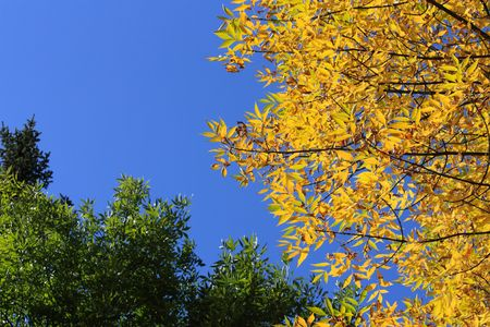 Autumn in park - yellow and green leaves over blue sky.