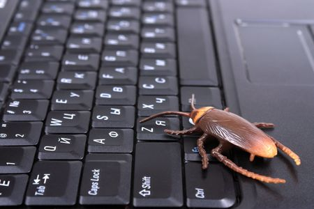 A bug on laptop keyboard