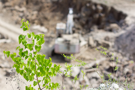 Tree over basalt quarry with excavator. Ecology concept.