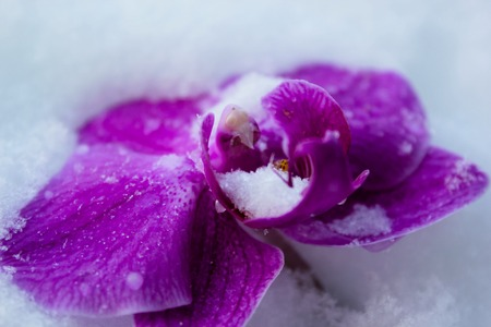 orchids in the snow