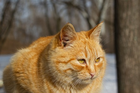 Portrait of a cat in the winter in the park