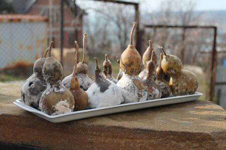 decorative gourd, after wintering, moldy, wilting, spoiling, brown, black, white, scary and beautiful, porcelain tray,