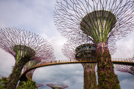 garden city: Singapore city, Singapore - July 17, 2016: Garden by the Bay Trees skywalk Editorial