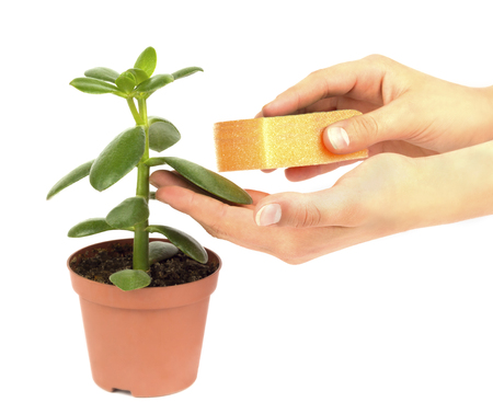 caring for potted flower