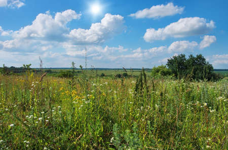 green meadow and blue sky with clouds in summer 免版税图像