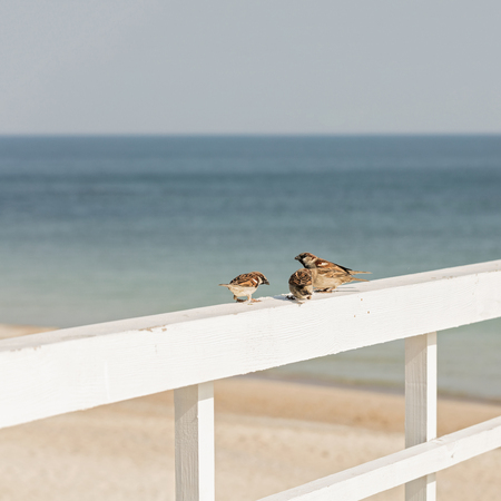 Sparrows on the background of the sea. Selective focus