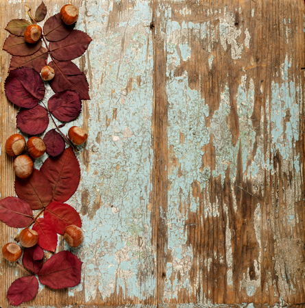 Flat lay frame of autumn crimson leaves, hazelnuts and walnuts on a blue wooden background. Selective focus.