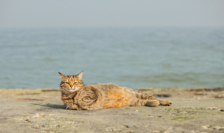 Funny grey cat on the beach against the sea. Selective focus.