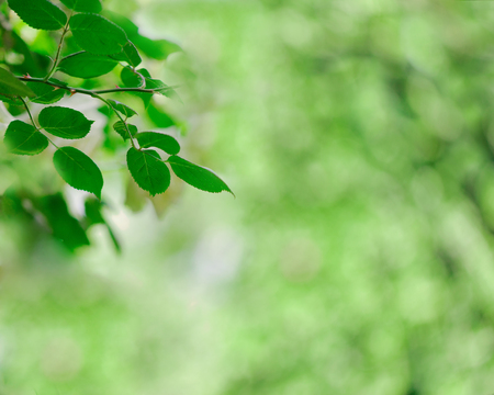 Green blurred background of leaves. Selective focus.
