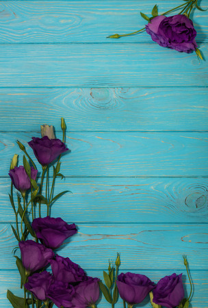 Violet flowers - eustoma, on a white blue background. Copy space.