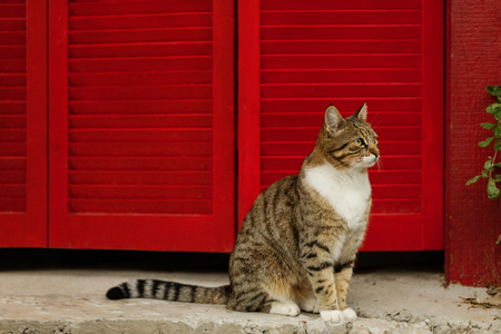 Beautiful sad cat on a background of red shutters. Selective focus.