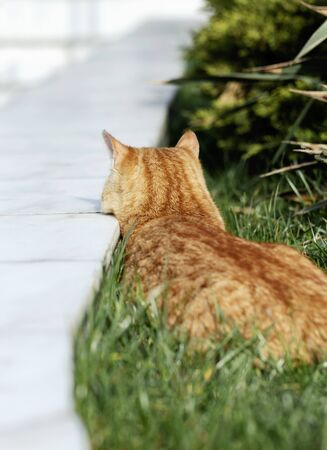 Funny lazy red cat resting on the grass. Selective focus.