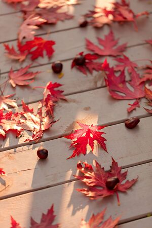 Autumn colors. Red maple leaves on gray wooden background. Selective focus. Blur effect.