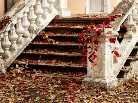 Autumn leaf fall. Red and yellow leaves on the destroyed old stone steps. Blur effect. 免版税图像