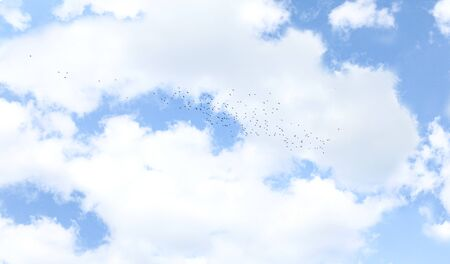 Beautiful blue sky with clouds background. Large flock of birds.