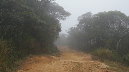 road and path through: Moving along mountain path among tropical forest. Point of view walk through rainforest path. First person view of going through jungle road at foggy wet weather. POV
