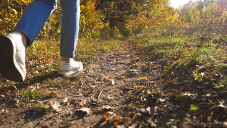 Low view of female feet in sneakers steps along path near forest. Legs of young woman goes among trail at early autumn. Girl walks at wild nature at sunny day. Close up Slow motion Imagens - 154676691