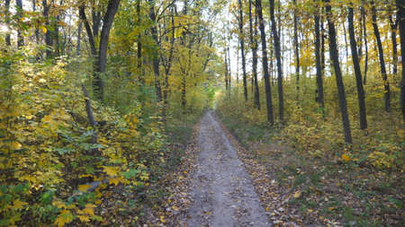 Camera moves along path among autumn forest at sunny day. View of walks along trail through woodland. Bright warm sunlight illuminates maple trees. Beautiful nature at background. Point of view Imagens - 154676690