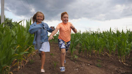 Little girl and boy having fun while running to the camera through maize plantation. Small kids playing among corn field. Cute smiling children jogging in the meadow. Concept of happy childhood Imagens