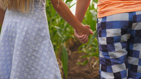 Couple of little kids standing at maize plantation and joining hands. Small blonde girl and red-haired boy holding arms and looking at corn field. Concept of first child love. Rear view