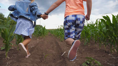 Little girl and boy holding hands of each other and having fun while running through corn field. Cute children jogging among maize plantation, turning to camera and smiling. Happy childhood. Imagens