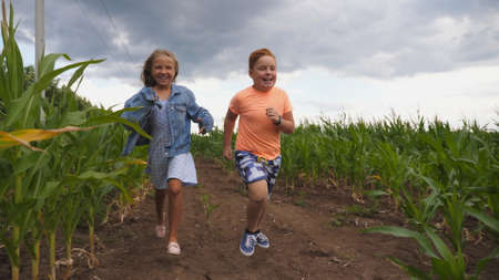 Little girl and boy having fun while running to the camera through maize plantation. Small kids playing among corn field. Cute smiling children jogging in the meadow. Concept of happy childhood Imagens - 154242876