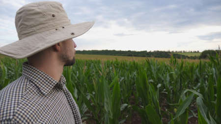 Close up of male farmer standing in corn field and pointing with his hand on large plantation. Young serious worker in hat looking on green meadow at overcast day. Concept of agricultural business. Imagens - 154242888