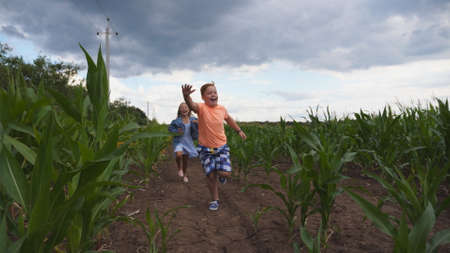 Little girl and boy having fun while running to the camera through maize plantation. Small kids playing among corn field. Cute smiling children jogging in the meadow. Concept of happy childhood Imagens - 154242943