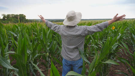 Close up of young farmer standing on corn field at organic farm and raising hands. Male worker looking at maize plantation at overcast day. Concept of agricultural business.