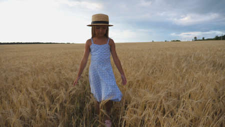 Beautiful small girl with long blonde hair touching golden ears of wheat while walking through field. Little kid in straw hat going over the meadow of barley. Cute child spending time at plantation. Imagens - 154259585