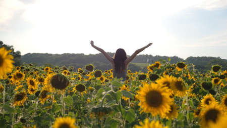 Unrecognizable pretty girl standing among big field with blooming sunflowers and raising hands. Young woman having relax or enjoying freedom at warm summer day. Beautiful landscape on background