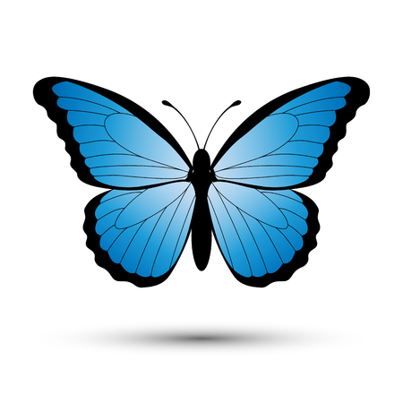Blue butterfly isolated on a white background. Vector illustration.