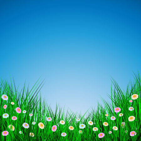 Green Grass with flowers on blue background, Vector Illustration.