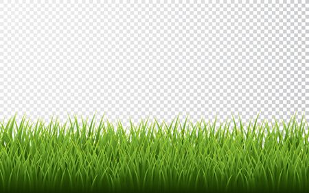 Green grass border set on transparent background. Vector Illustration.