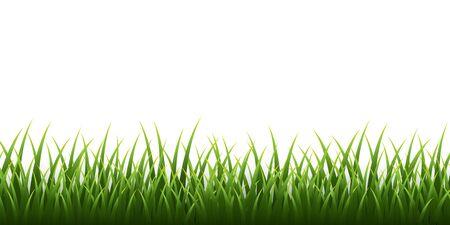 Green grass border set on white background. Vector Illustration.