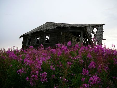 decrepitude: old shed in willowherb Stock Photo