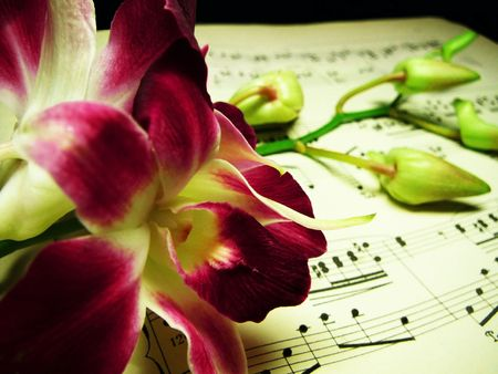 purple orchids on old sheet music, with defocused on buds and paper behind, in retro style