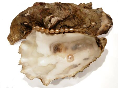 oyster shell: oyster shell with pearls isolated on white background, artistic shadows Stock Photo